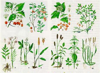 Лекарственные растения башкирии реферат 8254